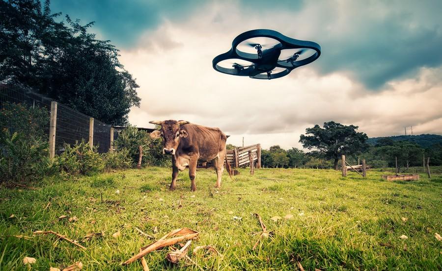 Drone vs. Cow