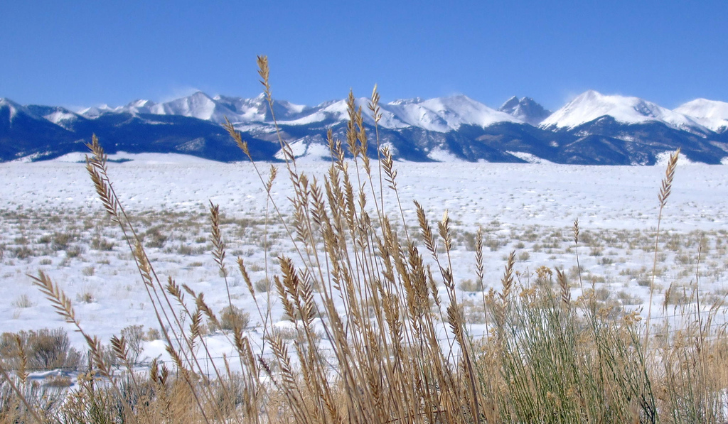 Wheat in front of mountains