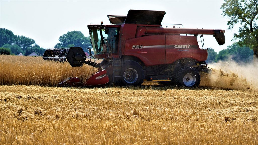 red combine harvesting wheat