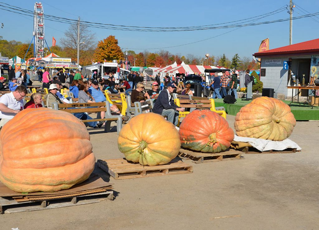 Giant pumpkin contest weigh in at the Rockton World Fair in Ontario, Canada