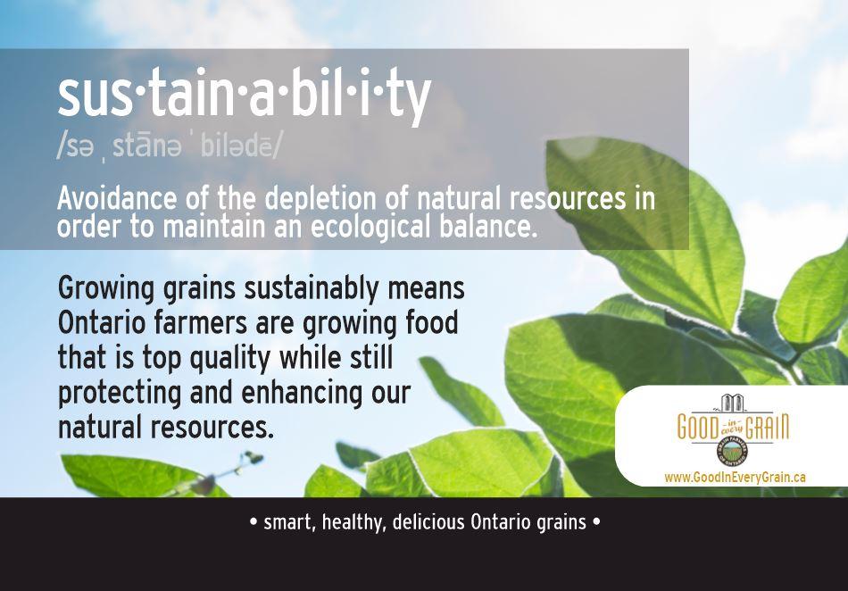 sustainability definition
